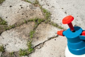 Is the Weedkiller Roundup Linked to Cancer?